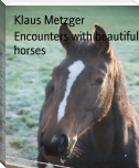 Encounters with beautiful horses