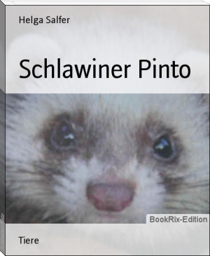 Schlawiner Pinto