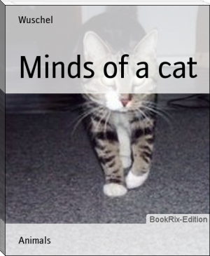 Minds of a cat